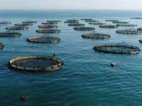 Deniz kirliliği ve müsilaj, vatandaşları çiftlik balığına yöneltti