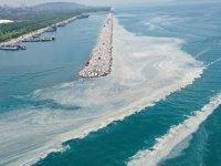 Deniz salyasına karşı midye çiftliklerinin sayısı artırılacak