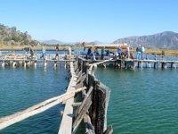 Muğla'nın deniz ürünlerine Avrupa ve ABD'den yoğun talep var