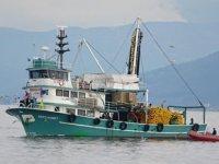 Hamsi sürüsü, balıkçılarını yüzünü güldürdü