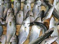 Lüfer bolluğu, balıkçıların yüzünü güldürdü