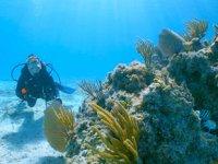 MSC Vakfı, 'Süper Mercan Programı'nı başlattı