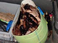 İzmir'de kaçak avlanan deniz patlıcanları suya bırakıldı