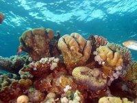 Dünyada mercan resifinin yüzde 14'ü yok oldu
