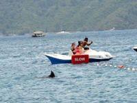 Marmaris'te köpekbalığı paniği!
