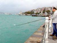 İstanbul Boğazı'nda 'plankton' patlaması