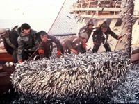 """AB İlerleme Raporu'nda """"Türkiye'de Balıkçılık Kanunu çıkarılmalı"""" denildi"""