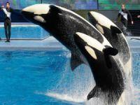 SeaWorld katil balina gösterilerine 2017 yılında son veriyor