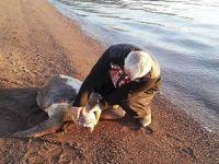 Deniz kaplumbağaları büyük tehdit altında