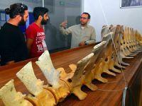 Balina iskeleti Muğla Sıtkı Koçman Üniversitesi'nde 2 yılda birleştirildi