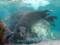'Akdeniz foklarının son sığınakları tehlike altında'