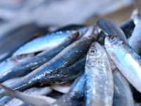 Balıkseverler bugün Ulusal Deniz ve Balıkçılık Bayramı'nda buluşacak