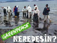 Ot-Çöp demeden eylem yapan çevreciler, LADY TUNA kazasında ortadan kayboldu