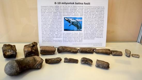 balina_fosil1.jpg