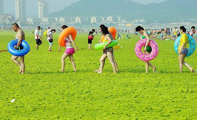 deniz-yosunu_3.jpg