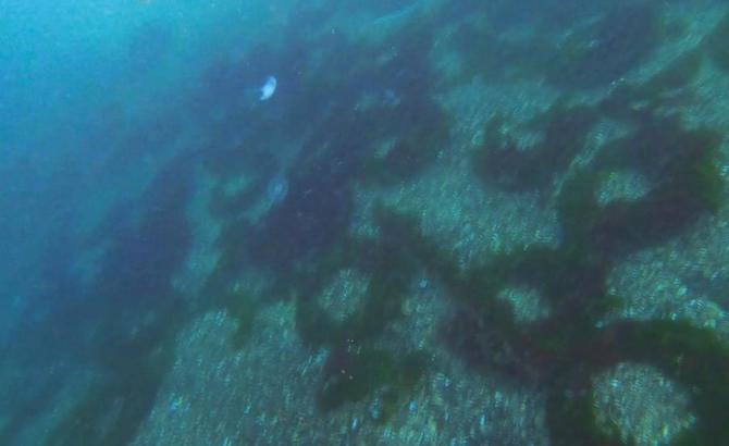 deniz_2-041.jpg