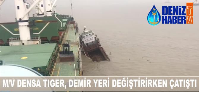 densa_tiger_b-001.jpg