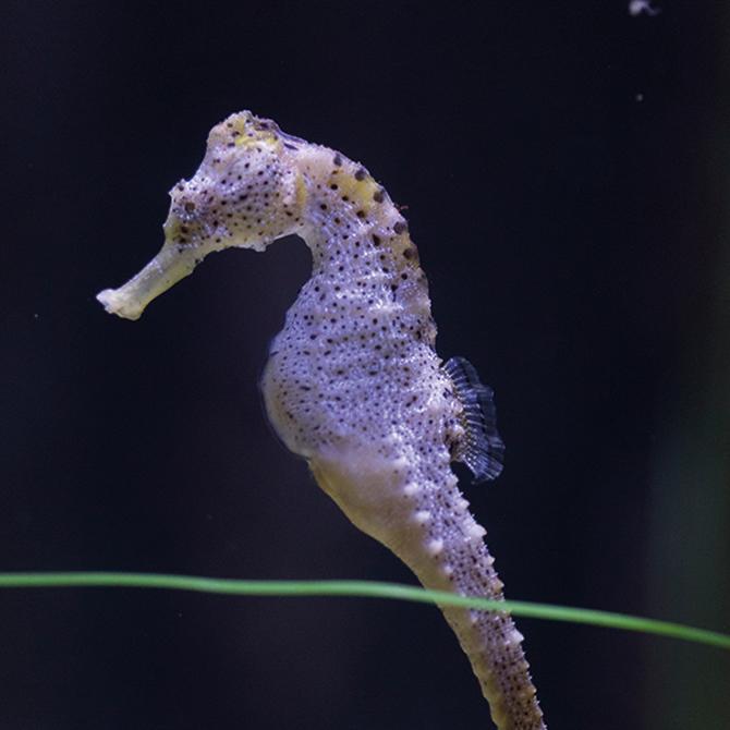 sea-life-akvaryum,-15-bin-deniz-canlisiyla-buyuluyor_1.jpg