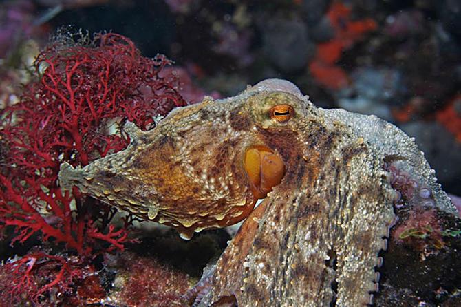 sea-life-akvaryum,-15-bin-deniz-canlisiyla-buyuluyor_3.jpg