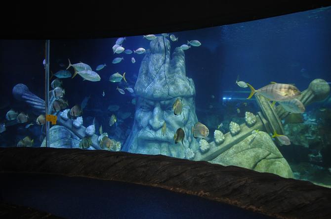 sea-life-akvaryum,-15-bin-deniz-canlisiyla-buyuluyor_5.jpg