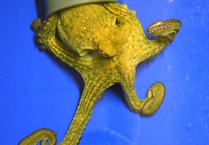 sea-life-akvaryum,-15-bin-deniz-canlisiyla-buyuluyor_7.jpg