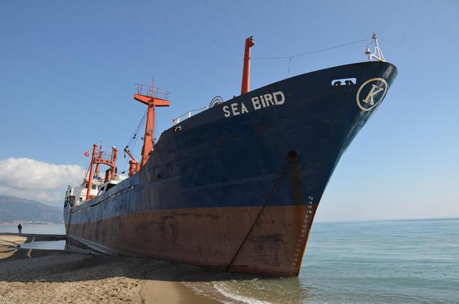 seabird3.jpg