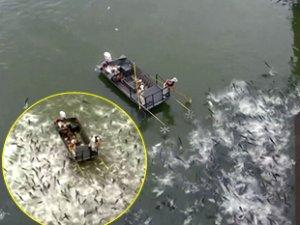 Nehirlerdeki yüzlerce balığa elektroşok verildi